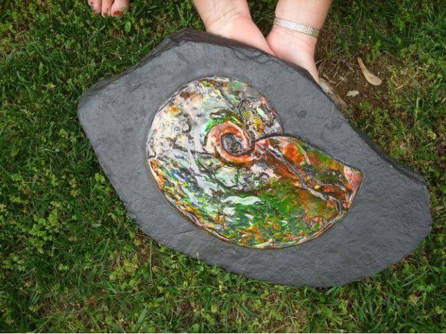 Canadian Ammonite