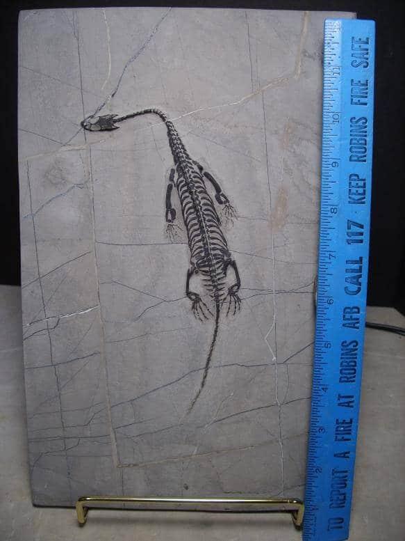 Dinosaur Fossils For Sale