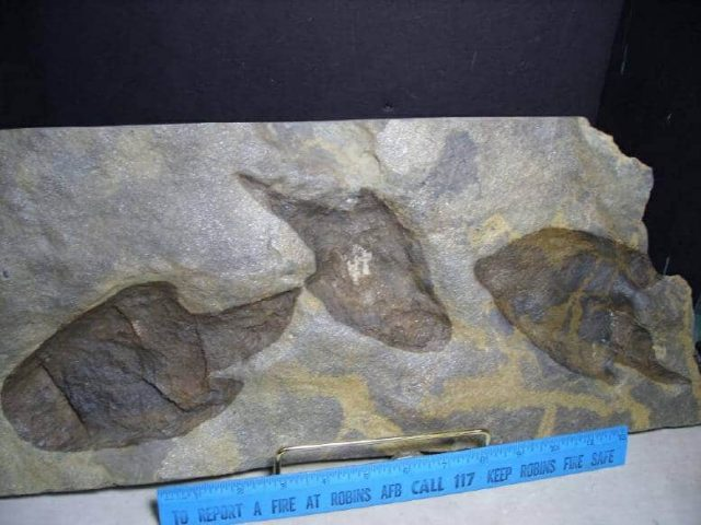 Dinosaur Footprint in Rock Tiles