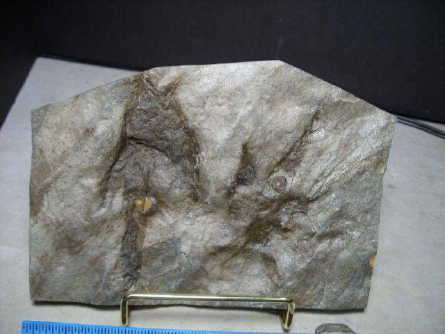 Baby Dinosaur Tracks for Sale: Footprints