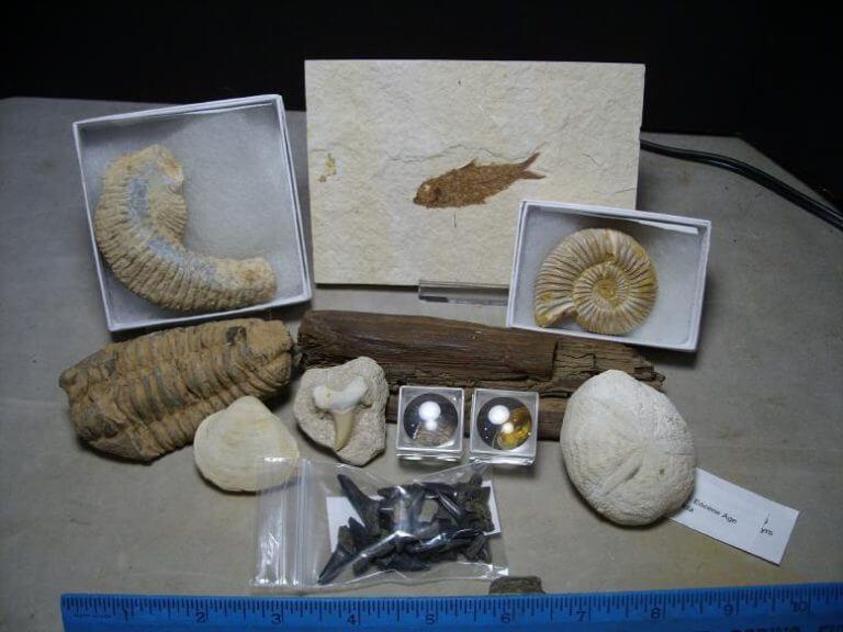 Starter Fossil Kit for Kids