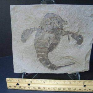Sea Scorpian