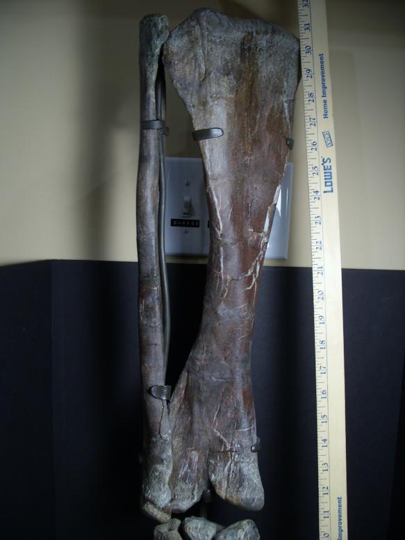 Hadrosaur Dinosaur Bones