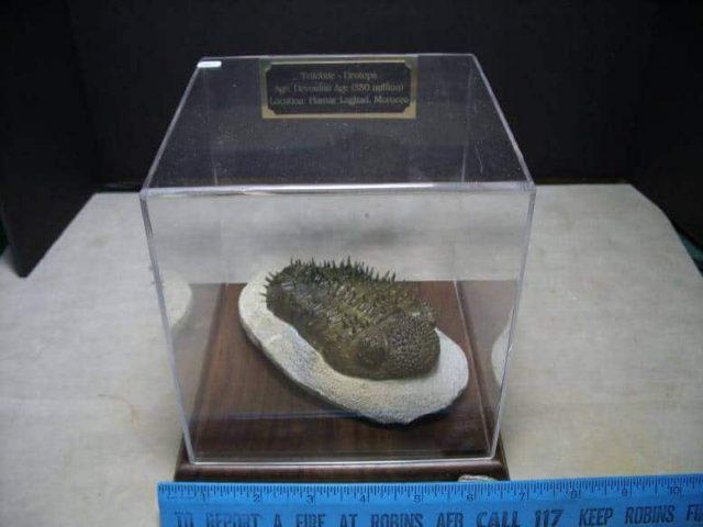 Drotops Trilobite