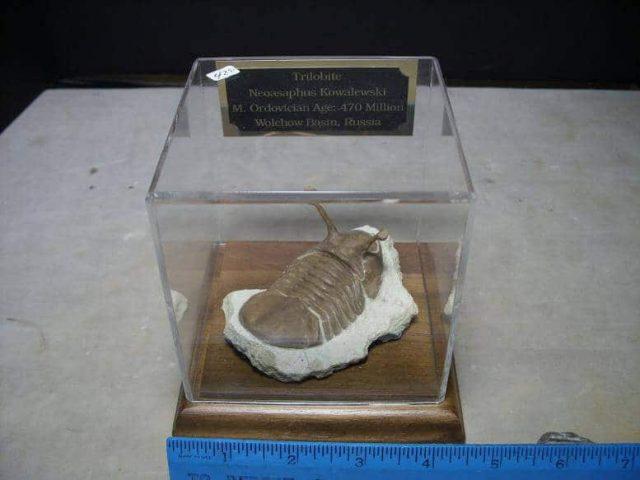 Kowalewski Trilobite