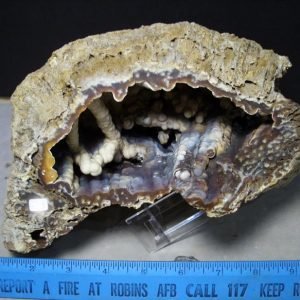 agatized coral fossils