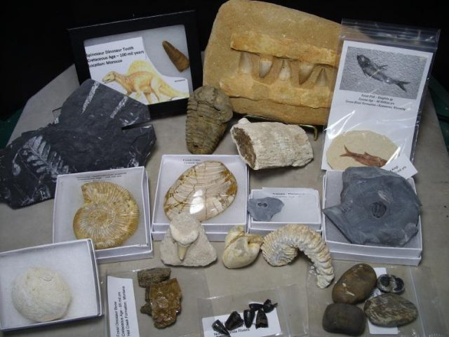 Dinosaur Fossil Collection