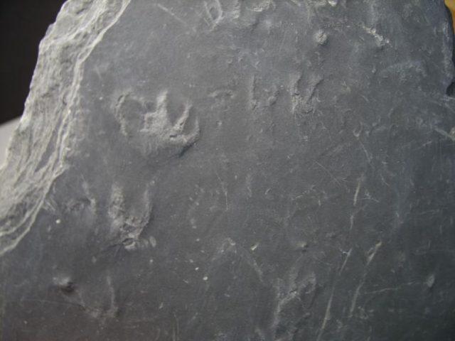 Fossil trackways