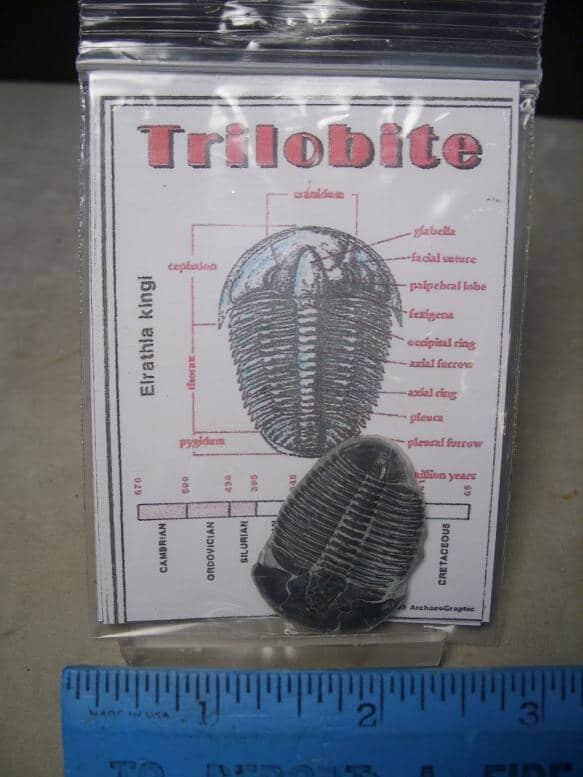 Utah Trilobites
