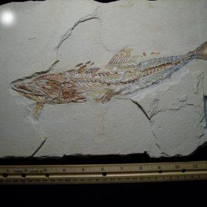 Lebonon fossils