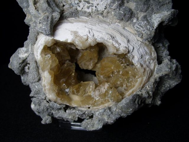 Mercenaria Fossilized Calcite Crystal filled Clam