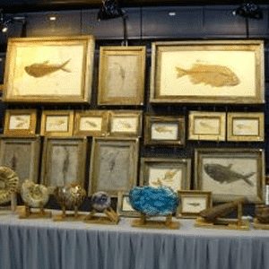 Rock & Fossil Shows