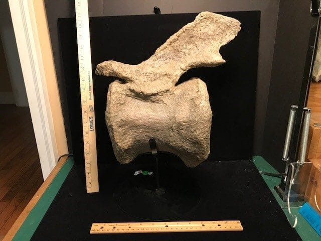 Jurassic Dinosaur Bones