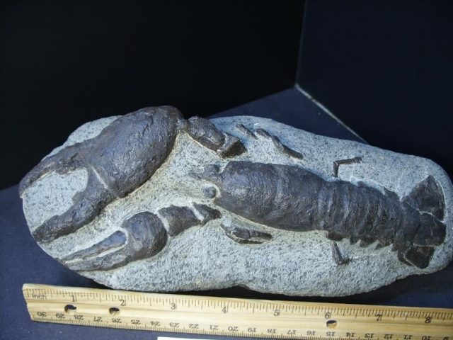 Fossil Lobster