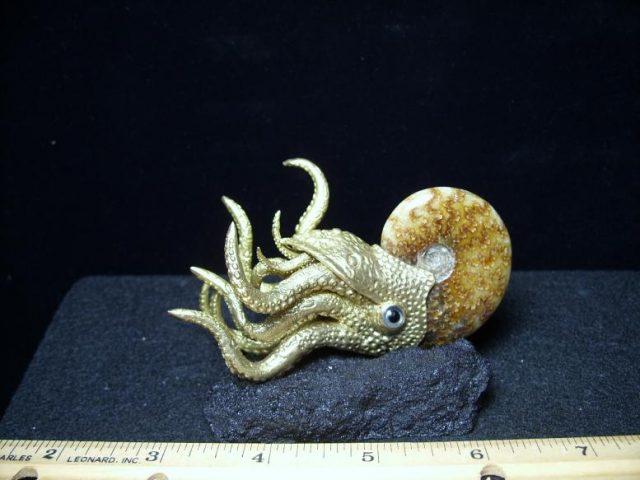 ammonite model
