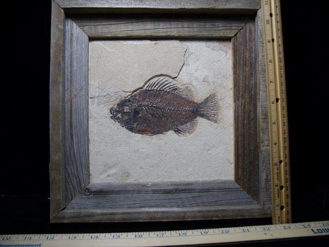 Fossil Fish