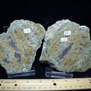 Dinosaur Coprolite