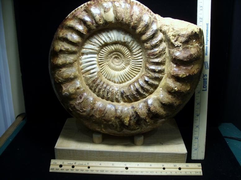 Whole Very Large Polished Ammonite (032019c) - The Stones ...