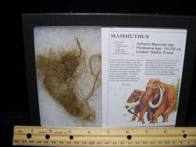 mammoth hair