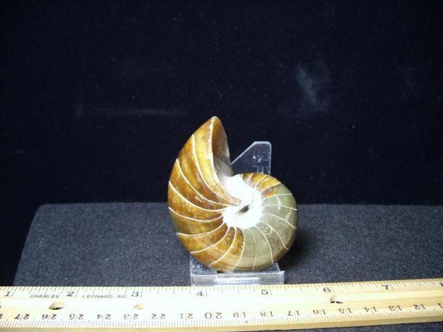 cretaceous age fossils