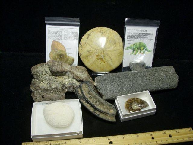 teaching fossil kits