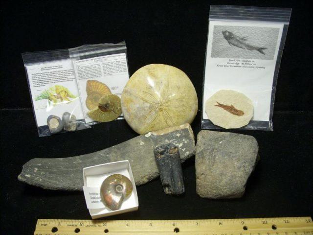kids fossils