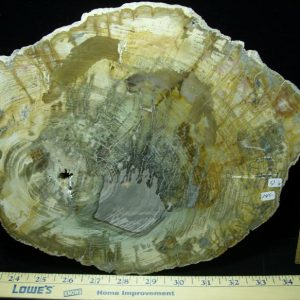 Madagascar fossils