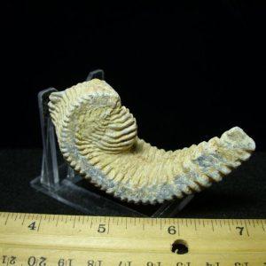 ocean fossils